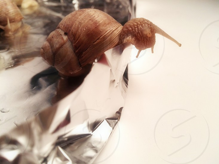 curiosity of the snail photo