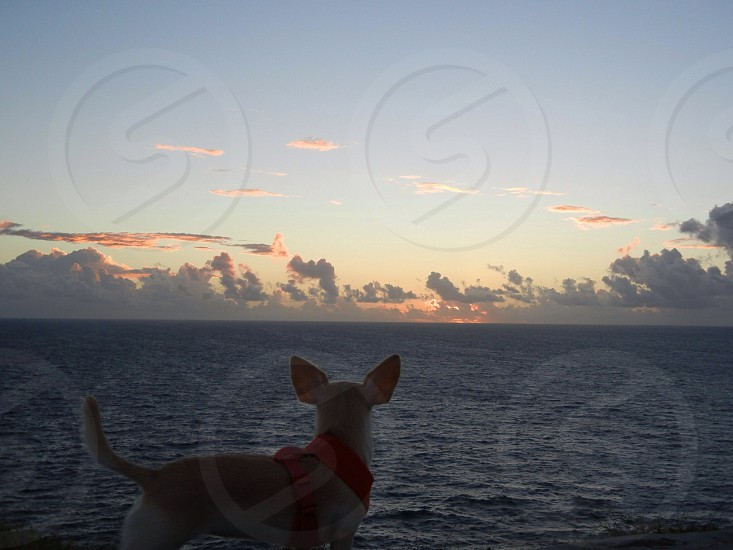 Sunrise; ocean; island; pet; dog; animal photo