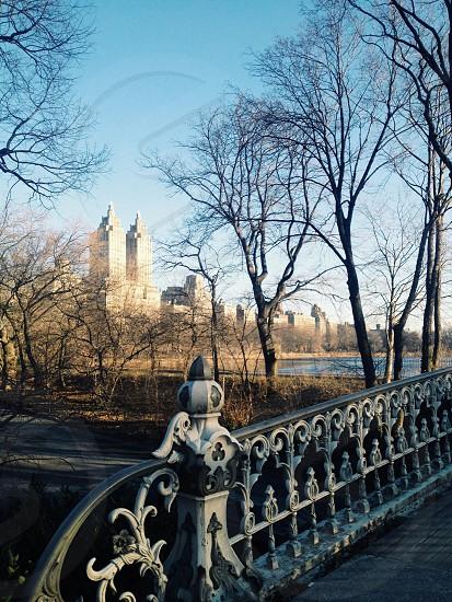 Morning run through Central Park.  photo