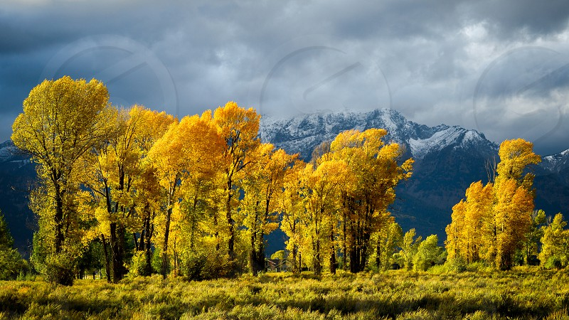 Autumn in the Gros Ventre River Valley photo