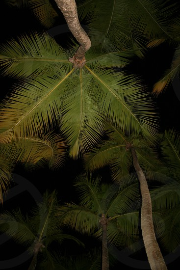 Palms from a hammock. photo