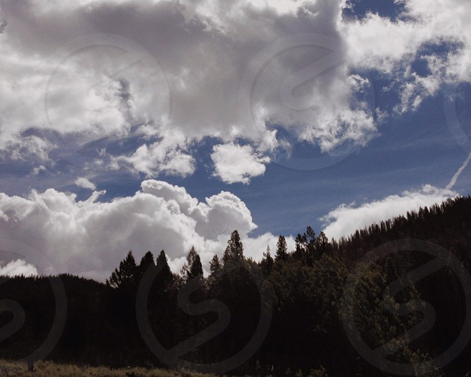 pine trees view photo