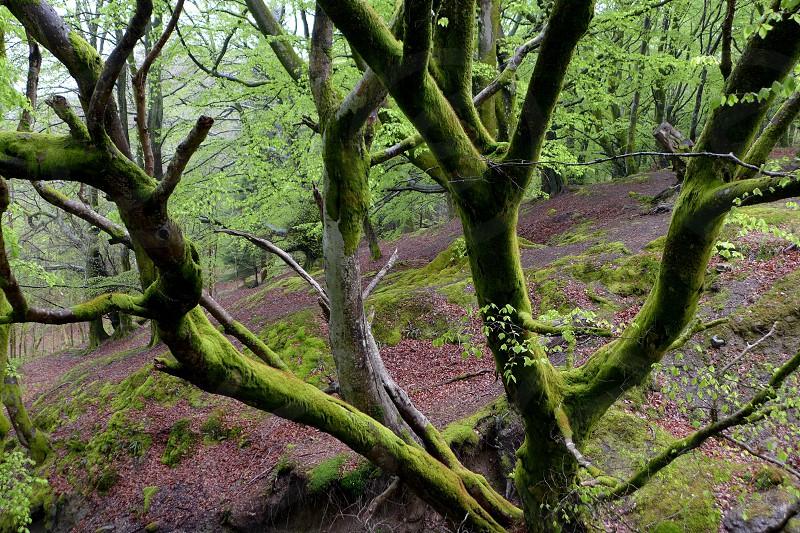Tree Moss photo