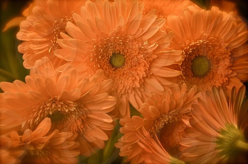orange daisy floral arrangement photo