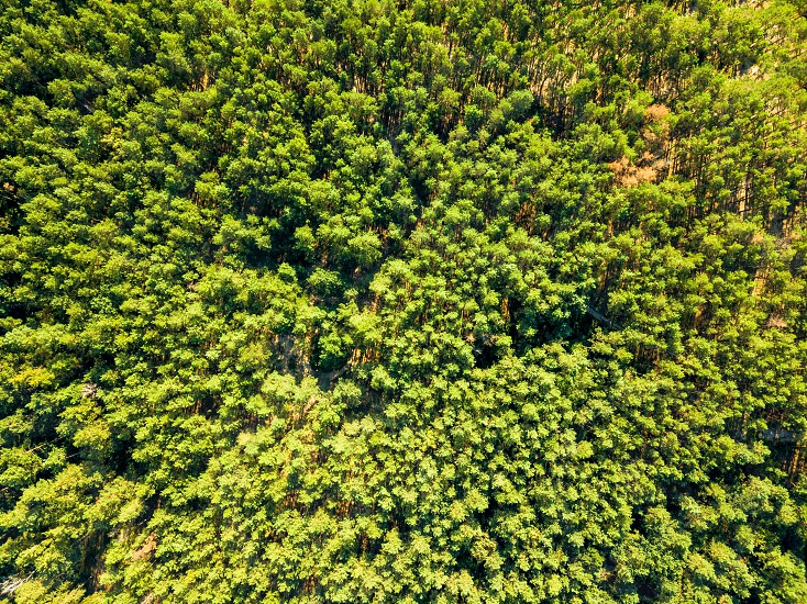 Green foliage forest on a sunny summer day in good weather. Nature conservation concept. Aerial view from the drone as a natural background. photo