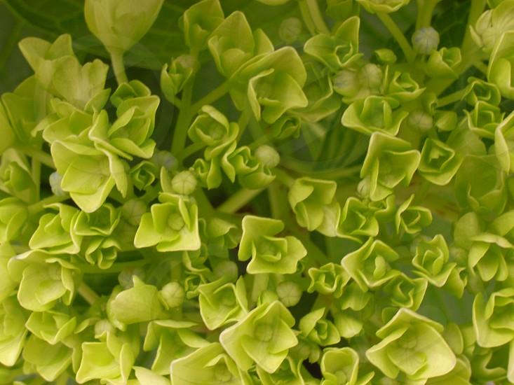 green flowers photo
