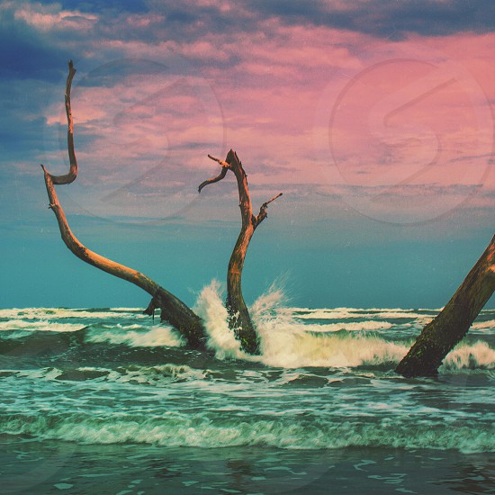 waves breaking against driftwood branches photo