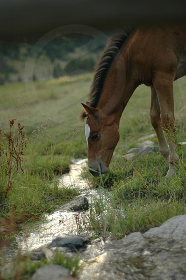 Horse and Stream photo