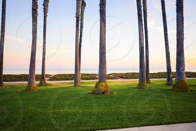 palm tree trunks photo