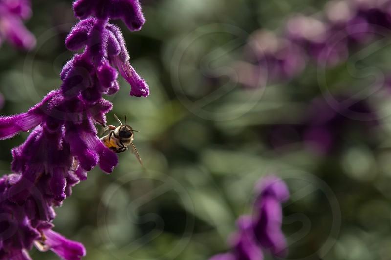 purple flower photo