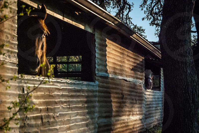 light dusk golden hour horse barn trees country shadows rustic old photo