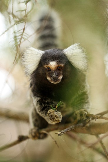 black monkey on tree branch photo