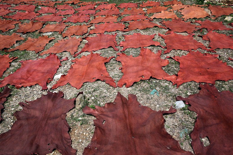 The fresh Leather gets dry on the sun near Leather production in front of the Citywall in the old City in the historical Town of Fes in Morocco in north Africa. photo
