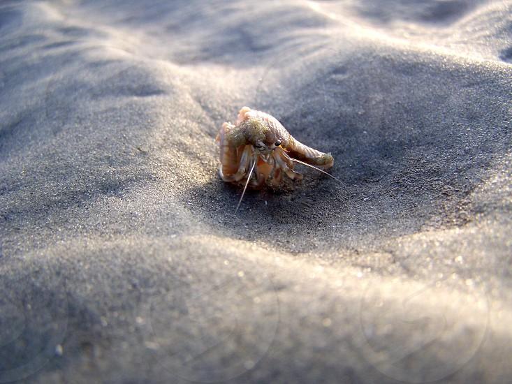 Hermit Crab closeup photo