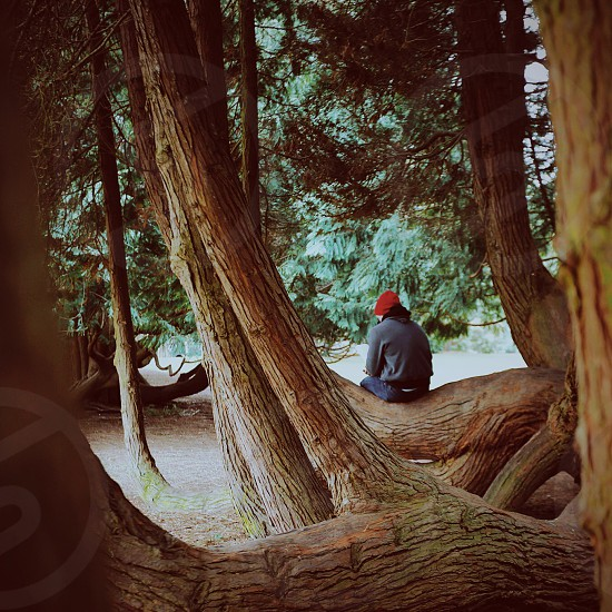 man in grey shirt sitting on brown tree trunk photo