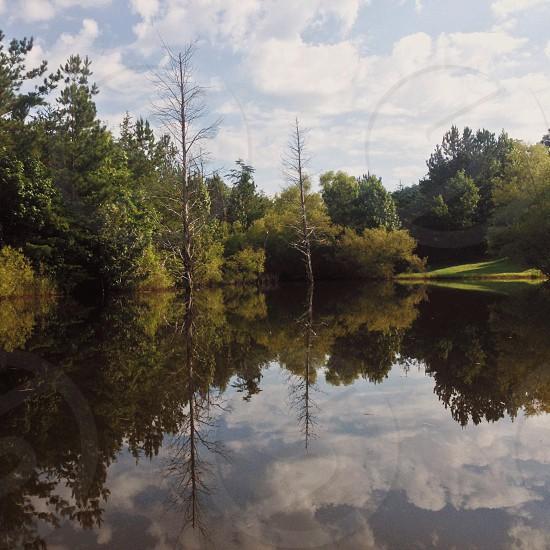 green trees near lake photo