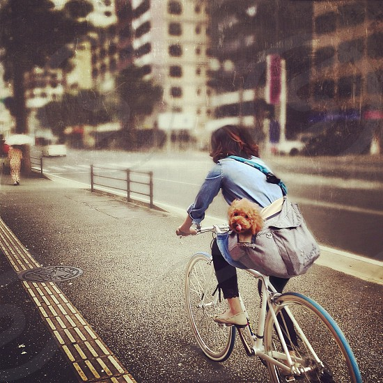 blue bicycle photo