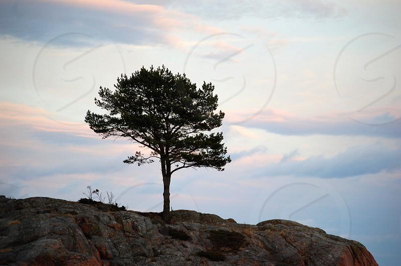 green tree on hill photo