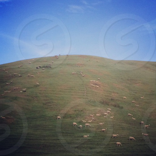 Petaluma Hills photo