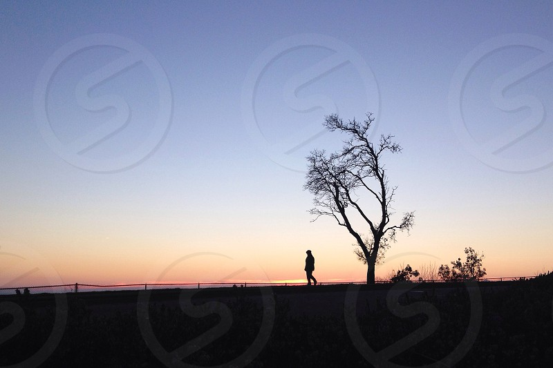 man in a tree silhouette photo