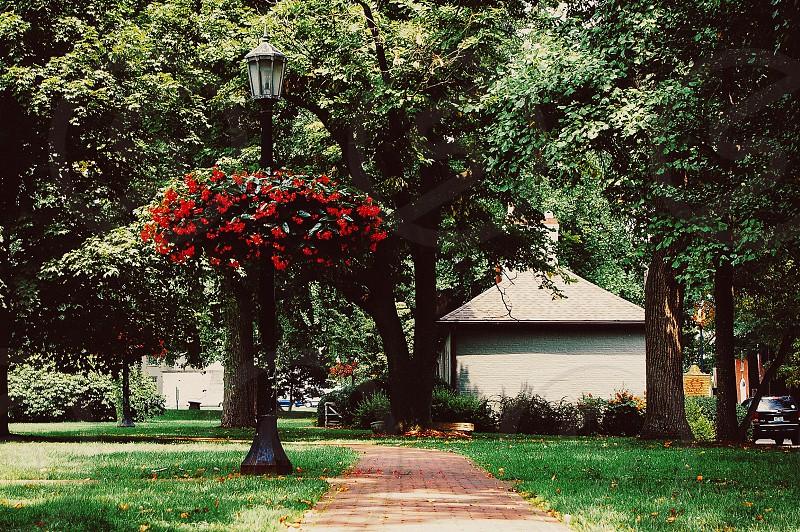 Park pathway flowers street lamp photo