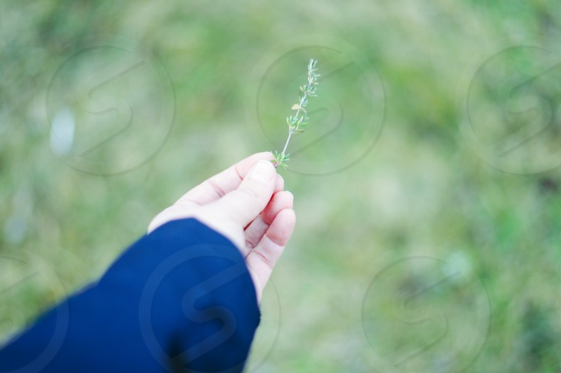 L'herbes provençale photo