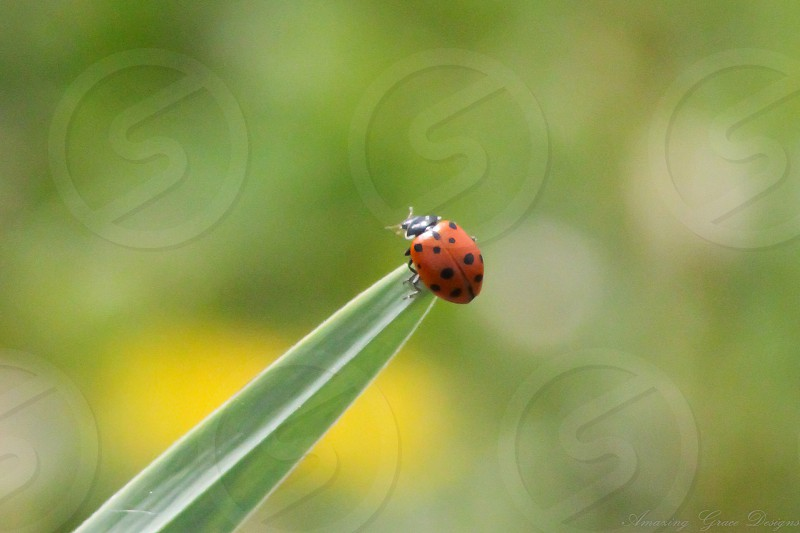 Ladybug Release party... photo