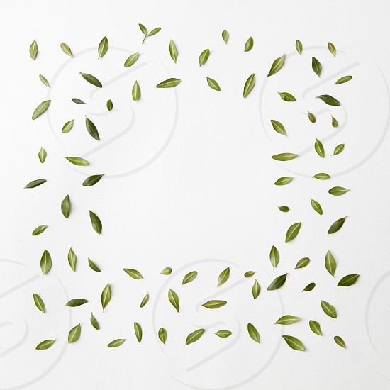 green leaves frame on white background for space text. flat lay. photo