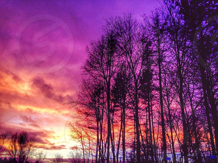 photograph purple sunset leafless trees photo