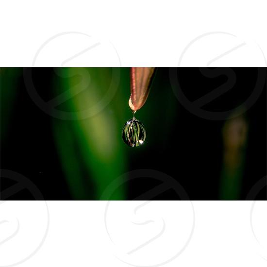 #water #drop #leaf #macro #nature photo