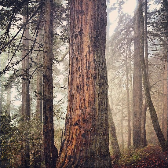 broown trees in the woods photo
