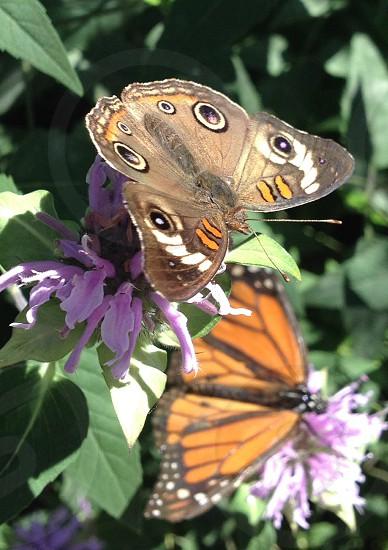 Polka dots butterfly photo