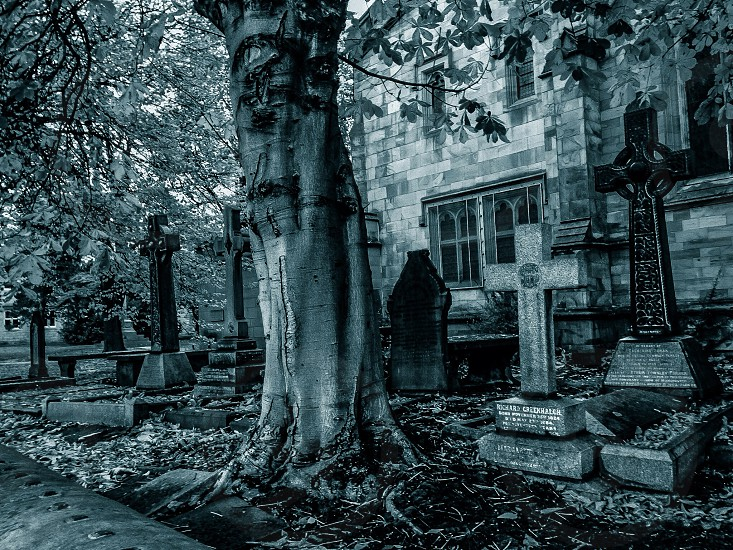 Tree With A Face At Graveyard..... photo