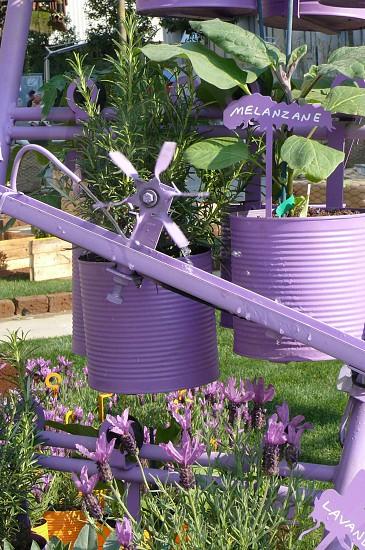 edible gardens rosemary eggplant lavender photo