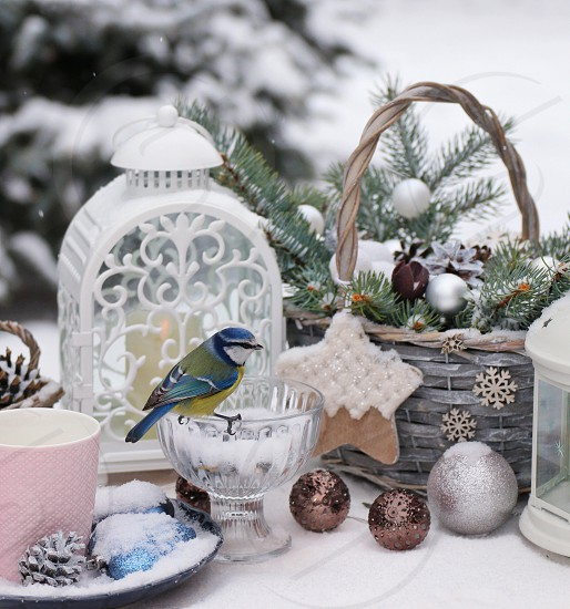 blue tit Christmas decorations  photo