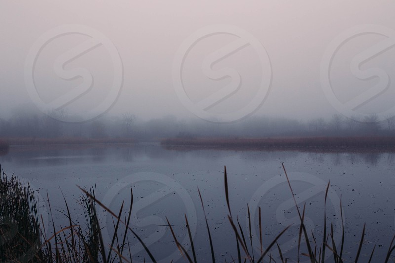 Obscured marsh. photo