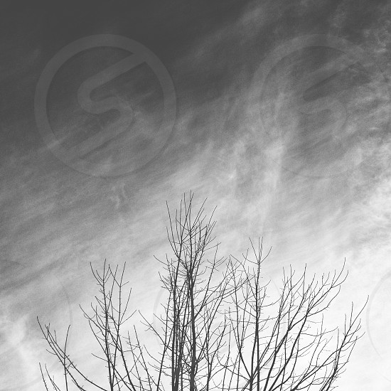 grey tree photo