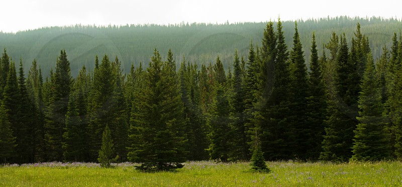 Valley in National Forest MT photo