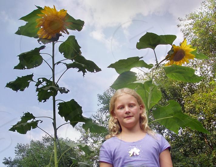 girl standing beside sunflower photo