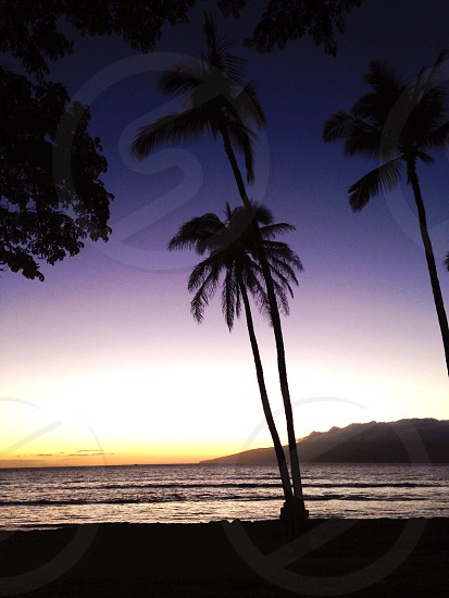 silhouette photo of coconut palm tree beside body of water photo