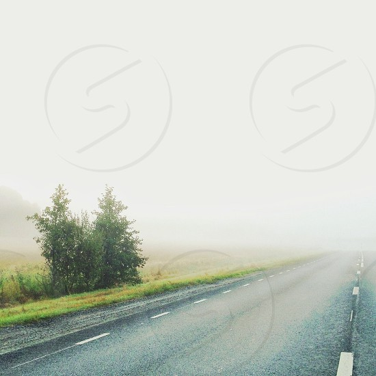 Foggy road and field with trees photo