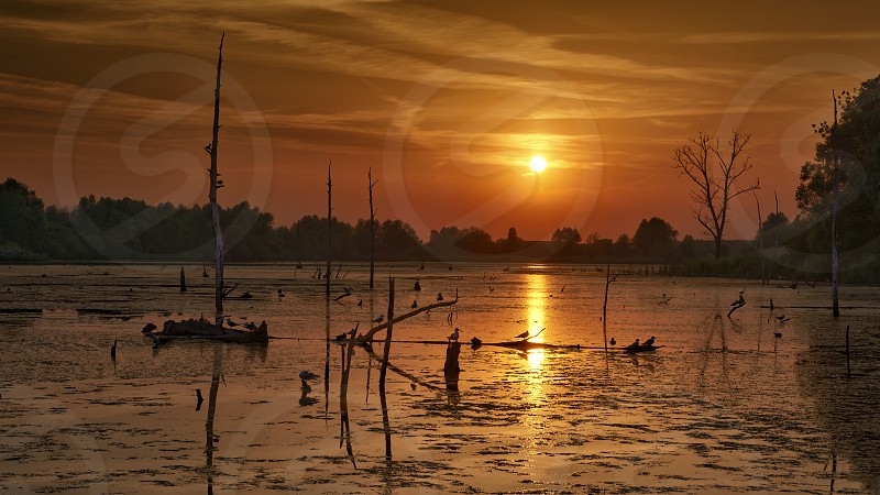 Sunset on a swamp with reflection of the sun photo