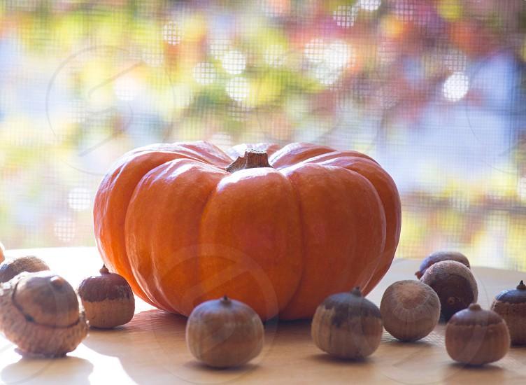 Orange pumpkin acorns by the window tree leaves outside bokeh photo