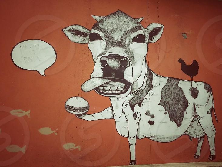 cow graffiti photograph  photo