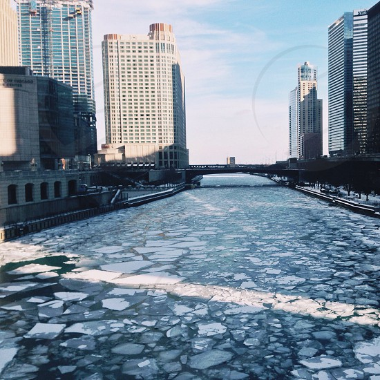 Bitter but beautiful in the winter...Chicago photo