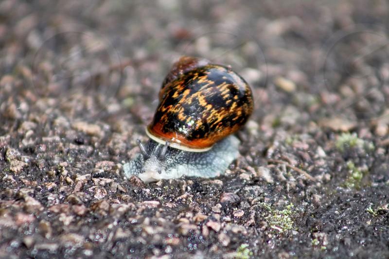 Snail looking at the camera photo