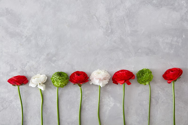 a creative composition of different flowers a white red rose and a green chrysanthemum on a gray background. A greeting card a valentine's day photo