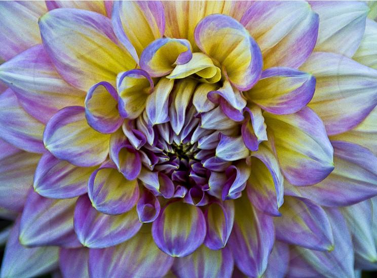 purple and yellow white flower photo
