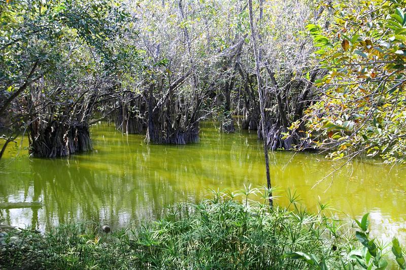 aguada cenote in mexico Mayan Riviera rainforest jungle photo