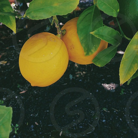 orange fruit photo